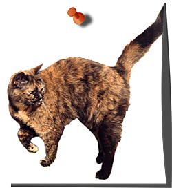 A Healthy Brindle Cat